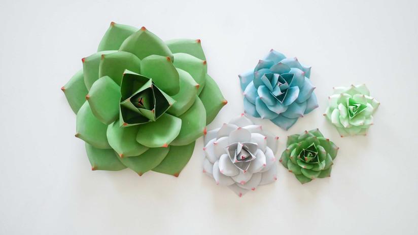 DWB Paper succulent