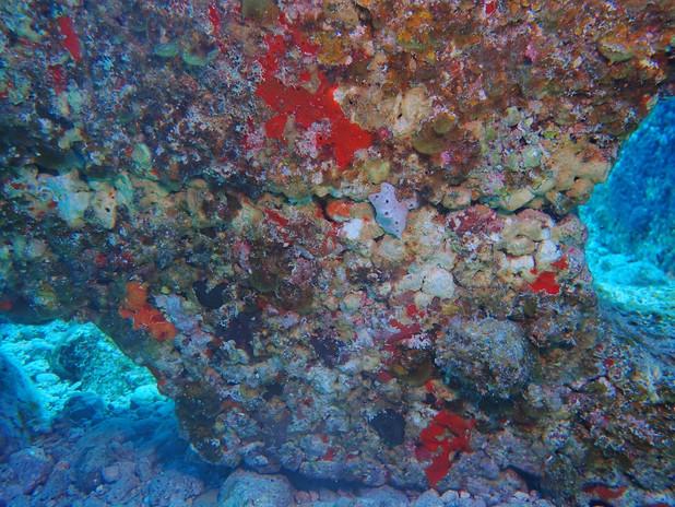 Sponges, corals, and biodiverse animal community on IntelliReefs.