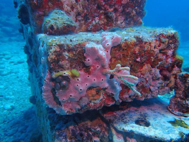 Sponge and biodiverse animal community on IntelliReefs.