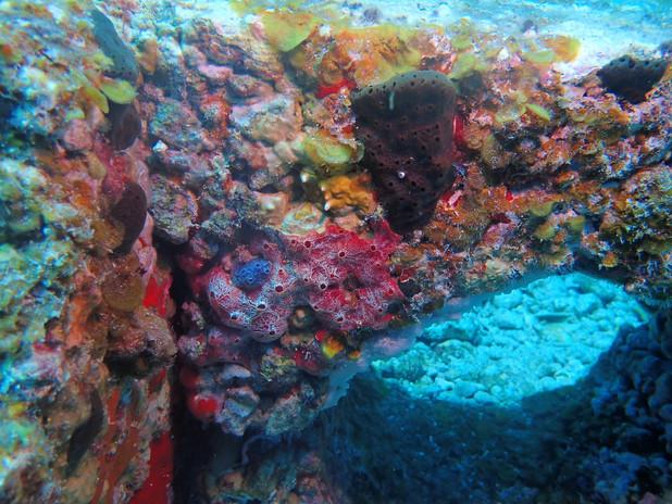 Biodiverse animal and plant community on IntelliReefs