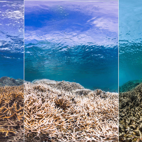 What Causes Reef Degradation?