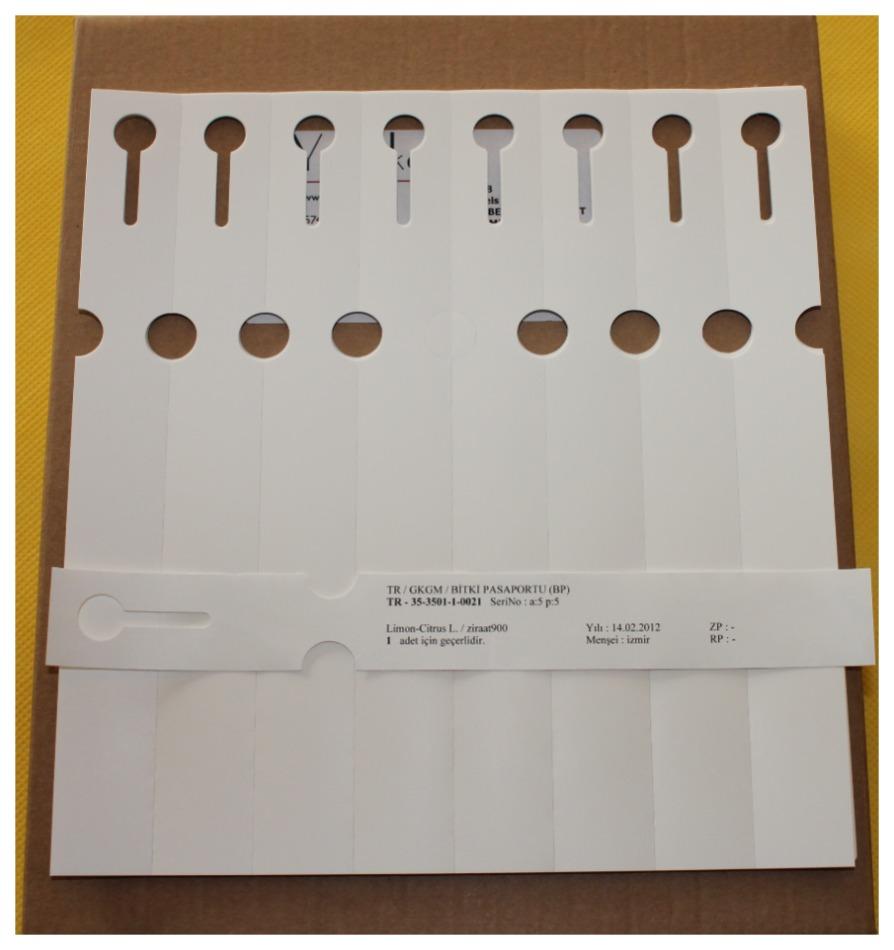 8'li Bitki Pasaport Etiket 25x212mm