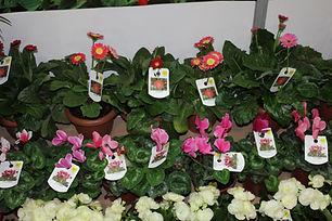 resimli bitki etiketi