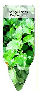 Aromatik bitki etiketi