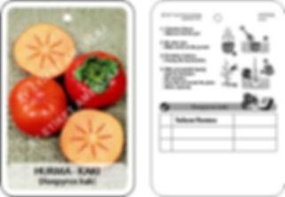 Meyve fidan etiketi