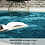 Thumbnail: Curacao - 490 petrol