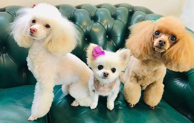 Pebbles, Gertie & Peanut