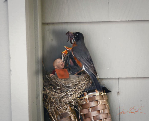 'stopped by robin's to see the boys and 'grab' a meal...  best in the nest always gets the long one... winner'