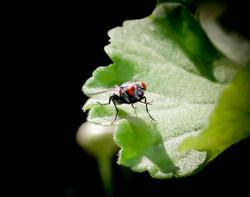 buzz buddy3