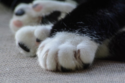 paws and claws1-2