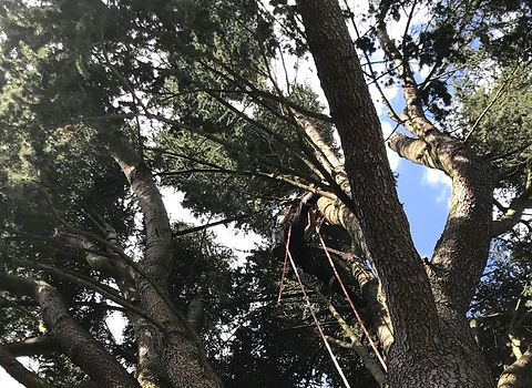 DANDROBATE: Élagage, haubanage et abattage d'arbres près de Rouen en Seine-Maritime (76)