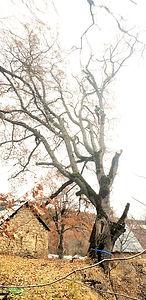 De la Forêt aux Hommes Ent. Lattanzi Giusto : VENTE DE BOIS DE CHAUFFAGE - ÉLAGAGE / ABATTAGE - ENTRETIEN DE JARDIN OU FORET DANS LES ALPES DE HAUTE PROVENCE , LES ALPES MARITIMES OU LE VAR