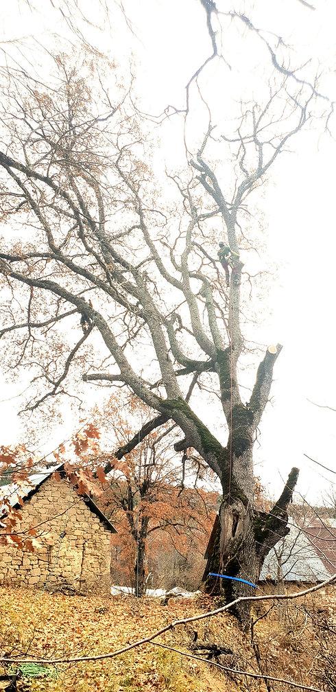 De la Forêt aux Hommes Ent. Lattanzi Giusto: Élagage et depot ventes de bois de chauffage dans les départements desAlpes-Maritimes et duVar en plus de notre département lesAlpes-de-Haute-Provence