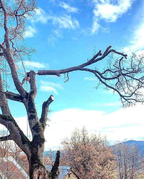 De la Forêt aux Hommes Ent. Lattanzi Giusto: Élagage, abattage, bucheronnage et travaux ou entretien forestiersdansles Alpes de Hautes Provence, les Alpes Maritimes ou le Var (04-06-83)