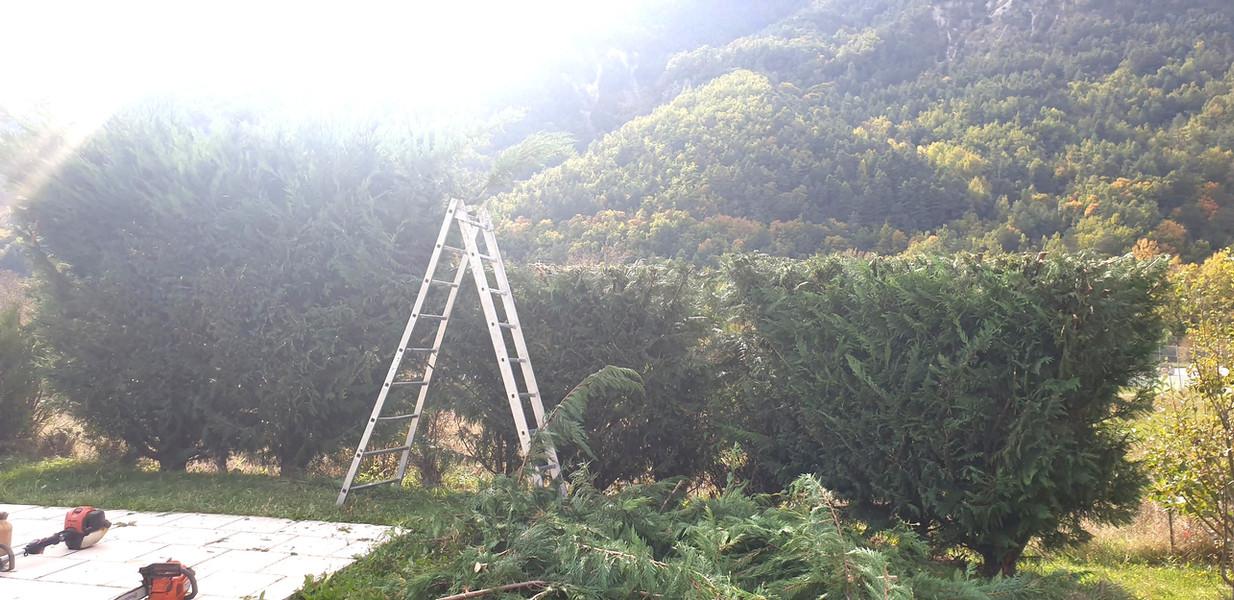 De la Forêt aux Hommes Ent. Lattanzi Giusto