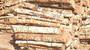 De la Forêt aux Hommes Ent. Lattanzi Giusto Ventes, achats et livraison de bois de chauffage dans les Alpes de Hautes Provence ou les Alpes Maritimes ( 04-06 )