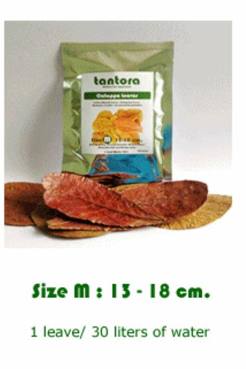 Tantora Indian Almond Leaves Medium 10 Pack
