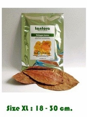 Indian Almond Leaves XL 50 Pack