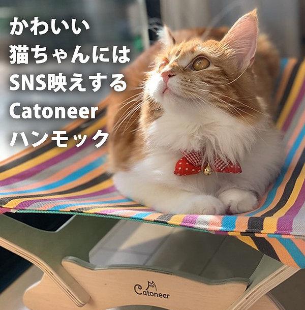 猫ちゃん.jpg