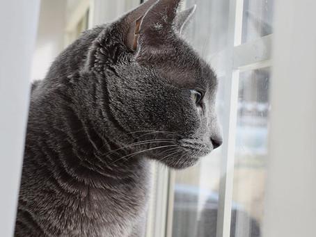 リリーさん今日も窓の外を警戒中⚠️笑