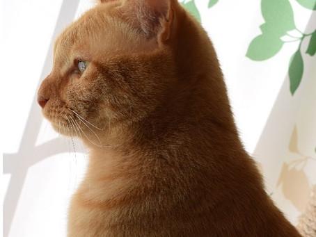 ラテさんは窓の外を見るのが大好き😘