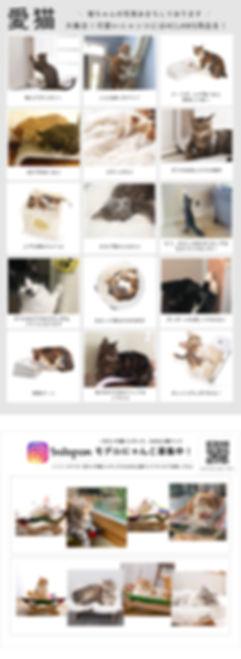 愛猫大集合インスタ.jpg