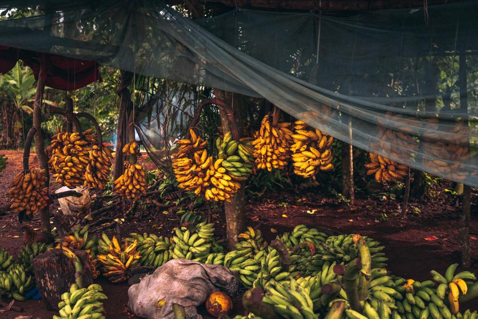 Fruits-20.jpg