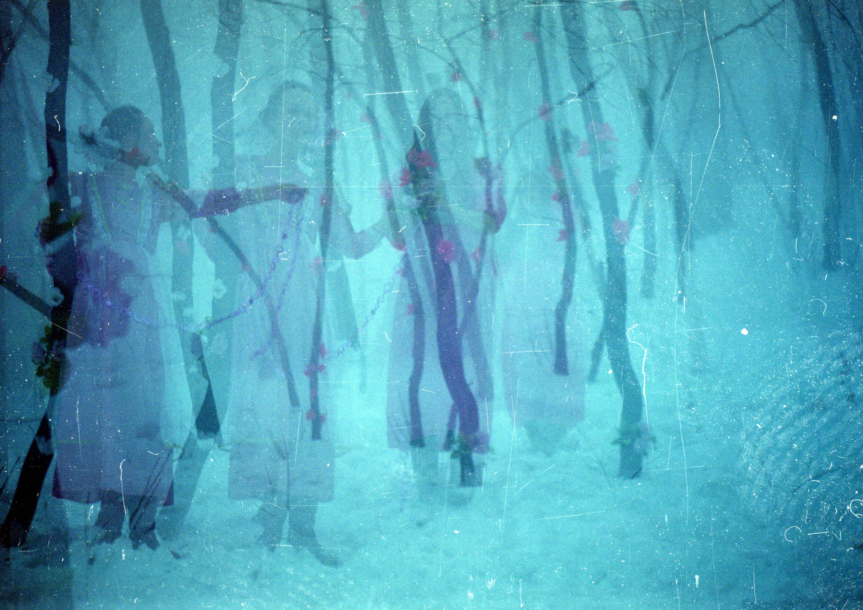 foggyForest7.jpg