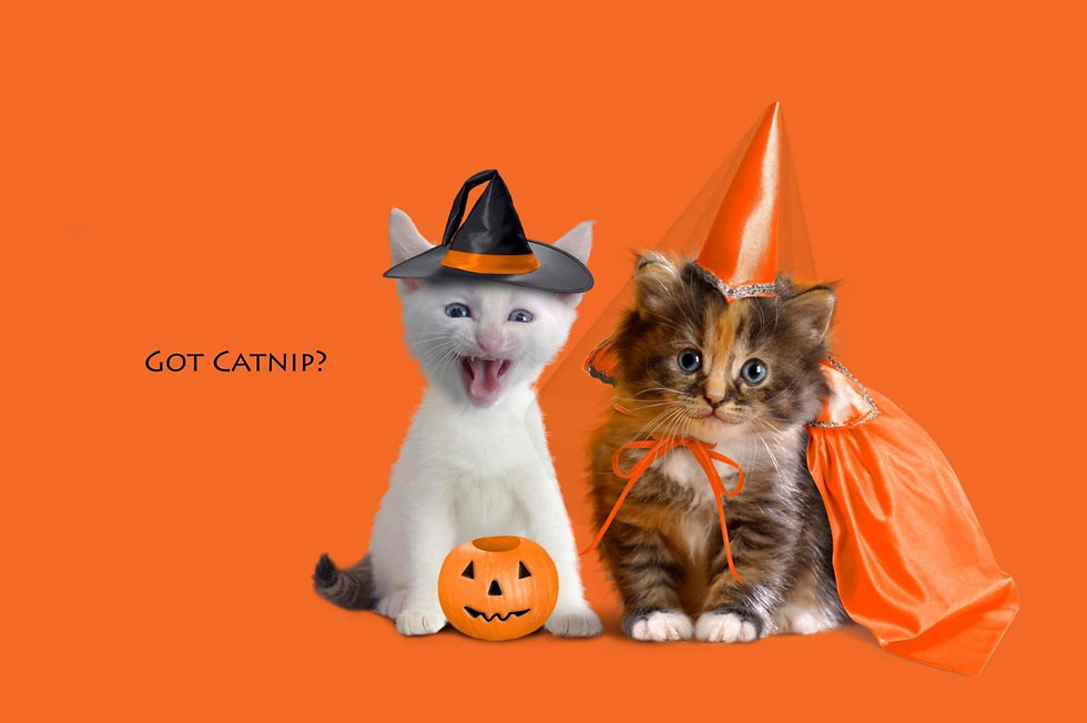 holiday halloween pumpkin kittens lantern.jpg