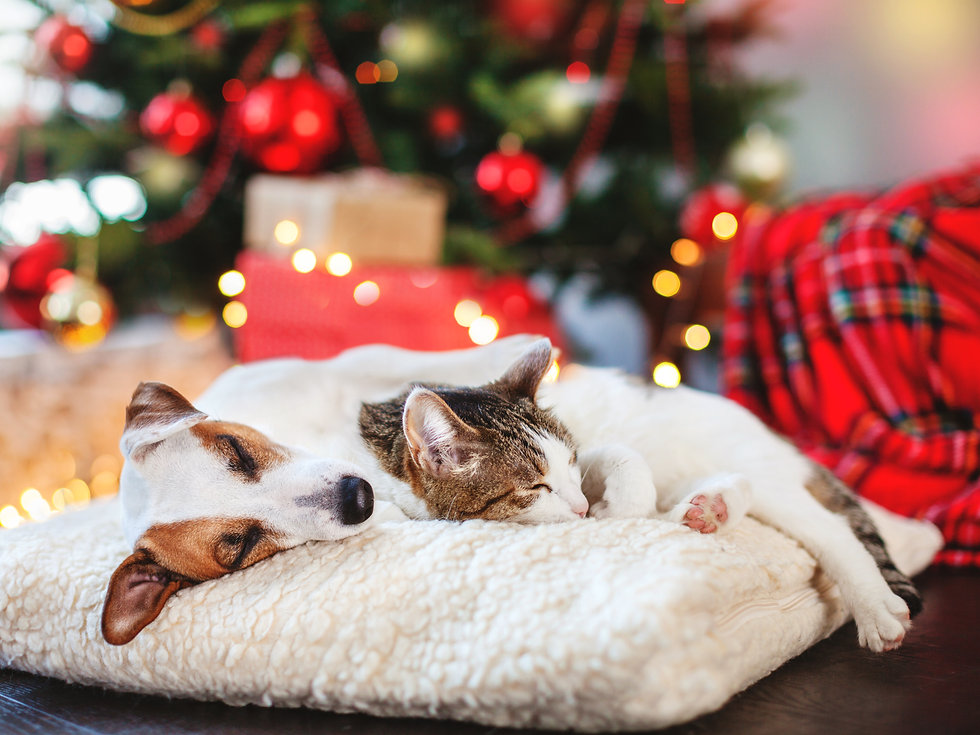 Cat and dog sleeping under christmas tre