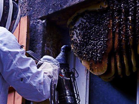 Избавление от ос и осиных гнезд в Москве