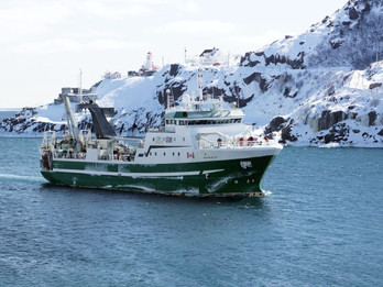 Newfoundland Lynx.