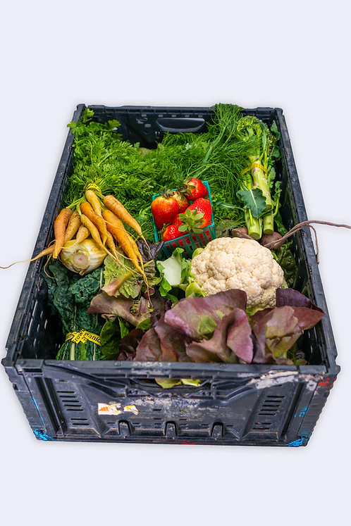 Large CSA Basket