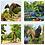 Thumbnail: Atlanta Botanical Gardens Coaster Set