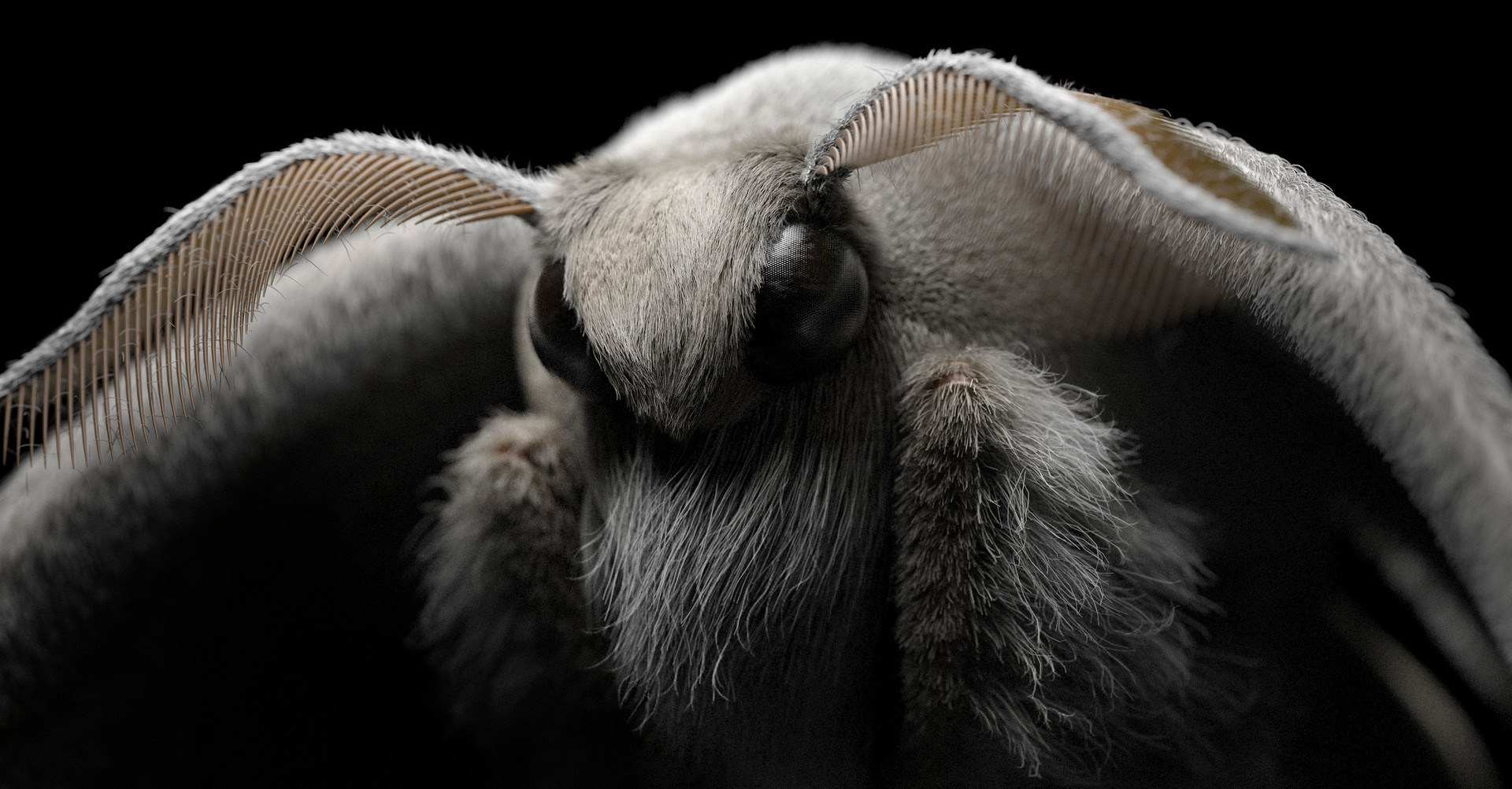 Moth 3D CGI Render Illustration