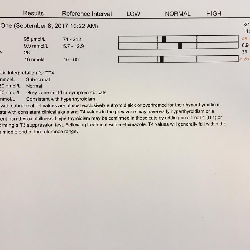 Klaartje's bloedonderzoek
