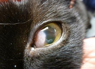 """Karel heeft """"schelpjes op zijn ogen"""""""