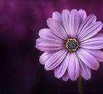 body flower.jpeg