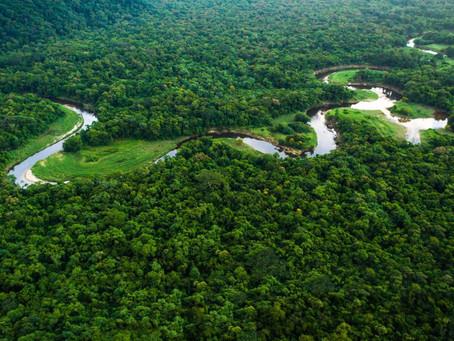 Após acordo com Bolsonaro, Alemanha vai doar R$ 163 milhões para sustentabilidade na Amazônia