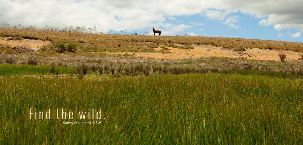 find-the-wild