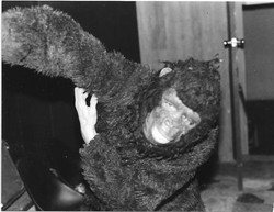 Gorilla at the Foolkiller