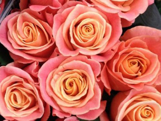 Is Coral the new Pink? Showcasing 'Miss Piggy' Roses at this years Spring Wedding Fair at th