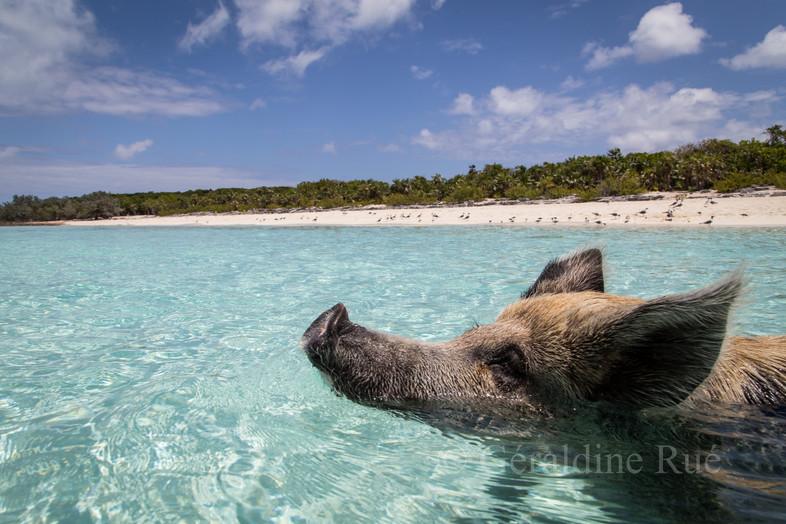 Bahamas 20163612©GéraldineRué.jpg