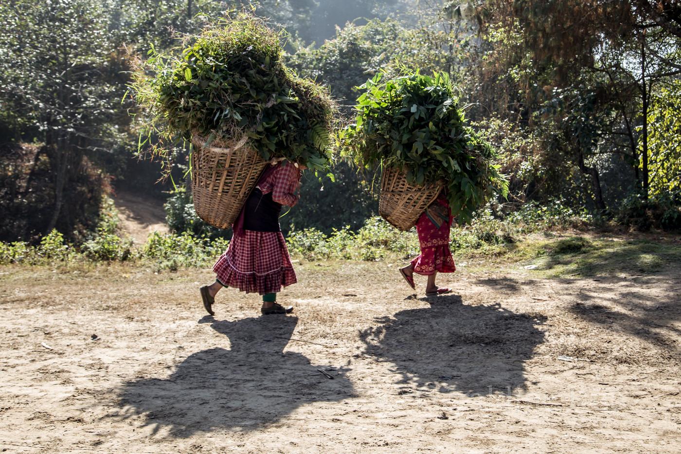 Népal 155639© Géraldine Rué.jpg