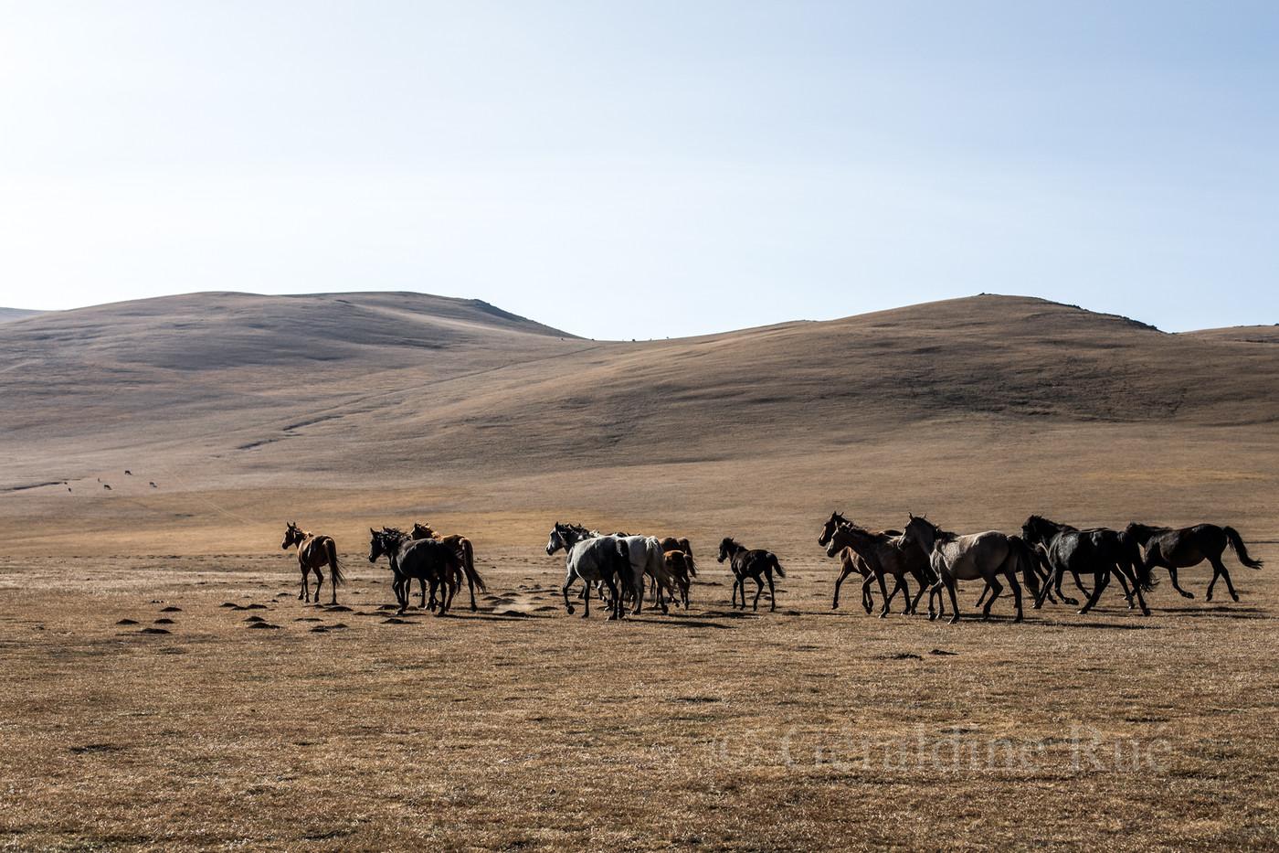 Kirghizistan9654© Géraldine Rué.jpg