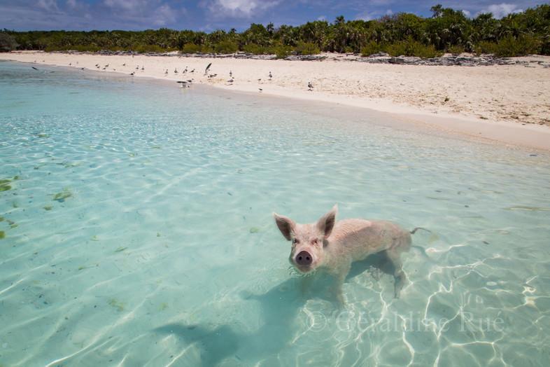 Bahamas 20163741©GéraldineRué.jpg