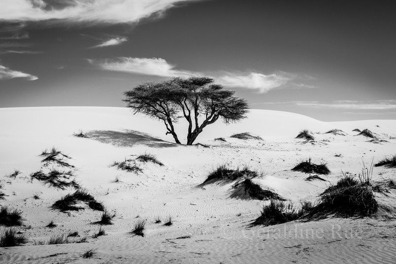 Mauritanie3582© Géraldine Rué.jpg