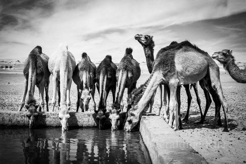 Mauritanie3481© Géraldine Rué.jpg