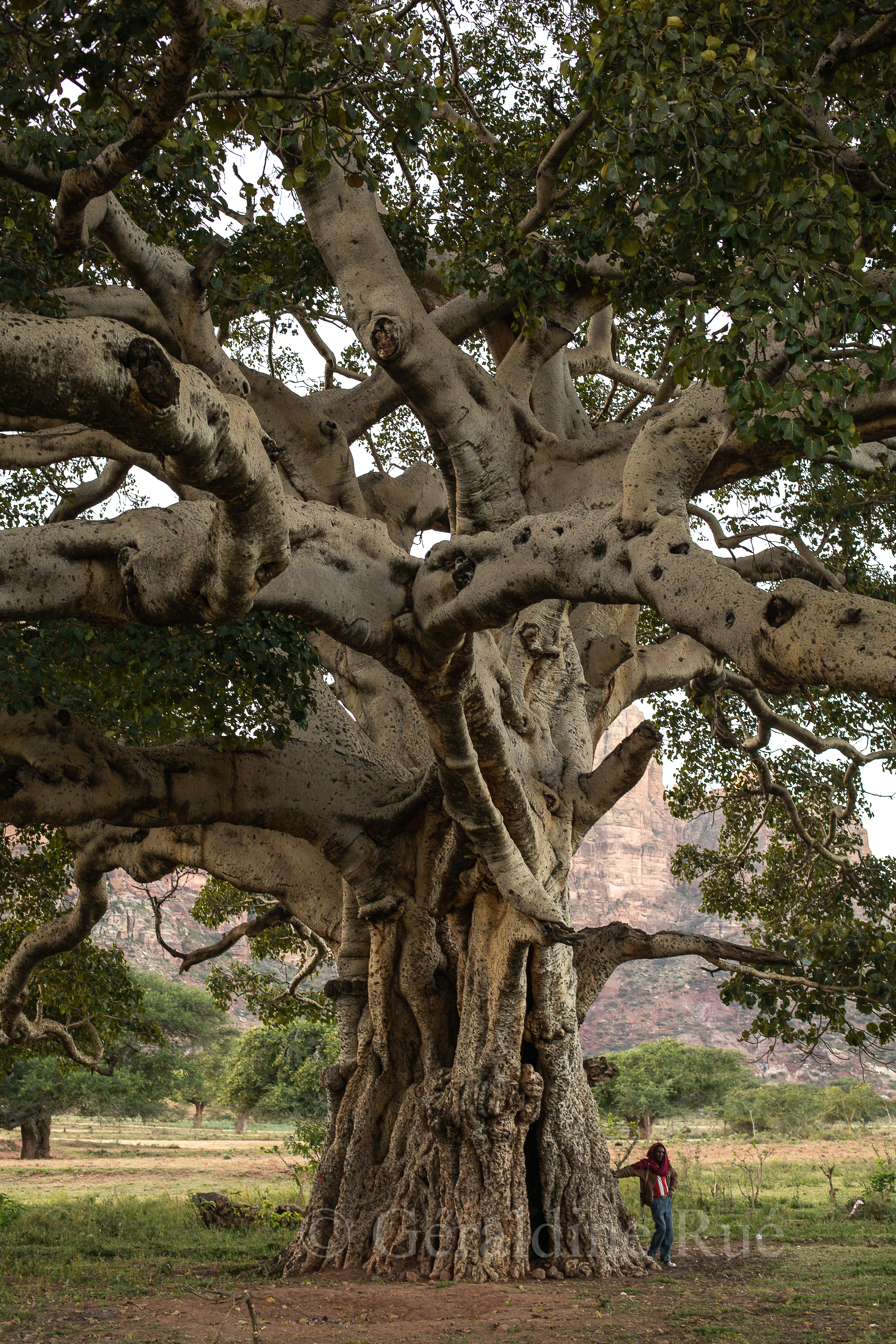 Ethiopie 185544© Géraldine Rué
