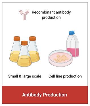antibody 03.png